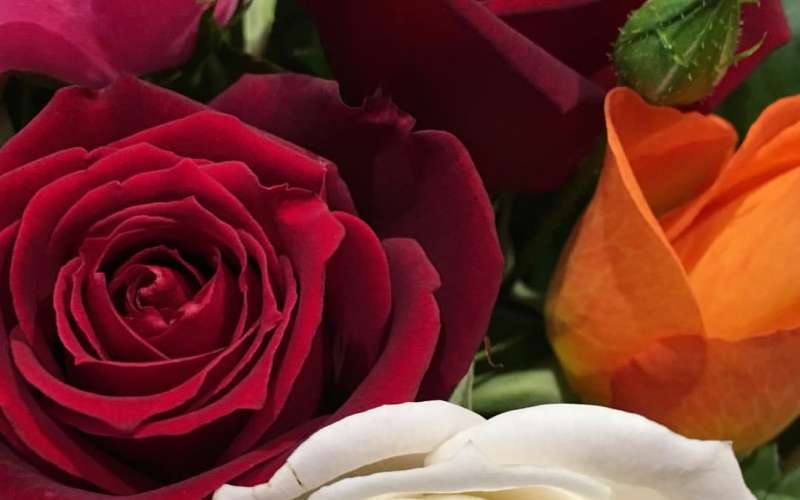 The Tamar Valley Rose Shop